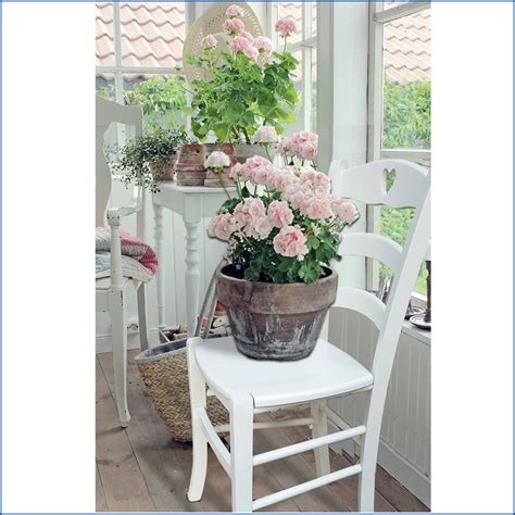 arredamento country chic provenzale sedie country 2 sedie in legno bianche stile shabby