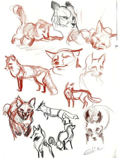 Kaos Animal Sketch 22 122 best how to draw foxes images on drawing reference drawing tutorials and fox