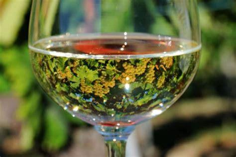 immagini bicchieri di vino dal brunello al barolo dal trento doc ai vini sud