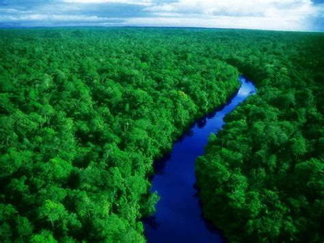 amazon com green amazon forest 1024x768 wallpapers amazon forest