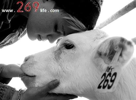 269 tattoo animal rights 269life activists etch and burn white calf branding number