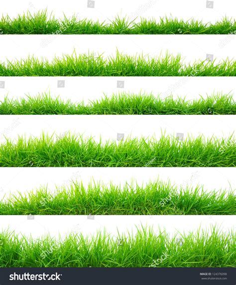 grass section grass stock photo 124376098 shutterstock