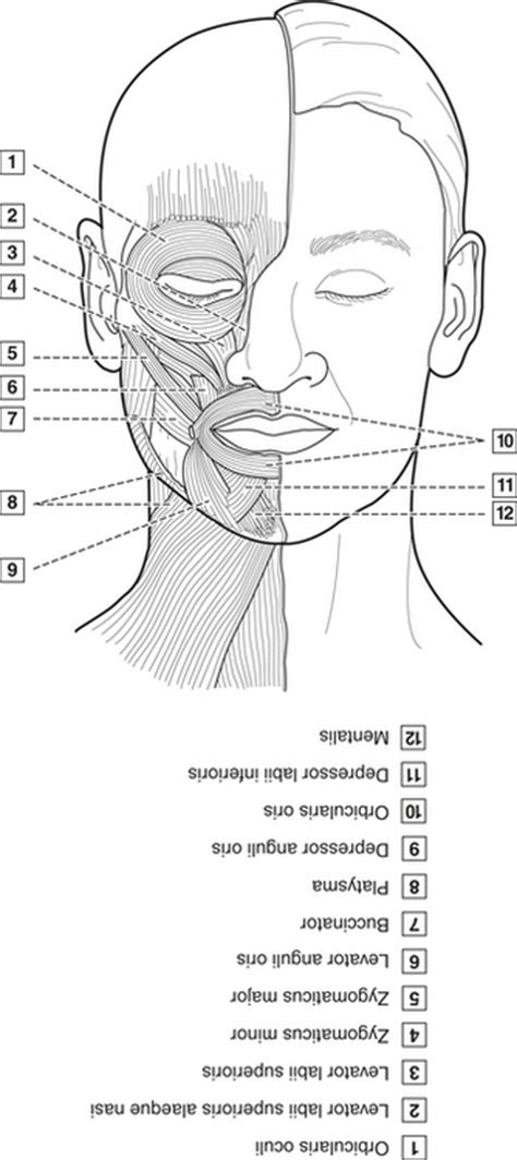 dental anatomy coloring book free dental anatomy coloring book coloring pages
