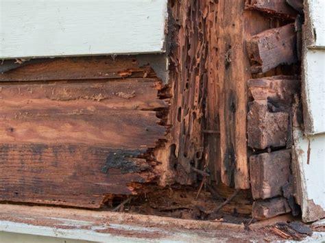 Membasmi Jamur Pada Pintu membasmi rayap di rumah ternyata butuh trik khusus sudah tahu rooang