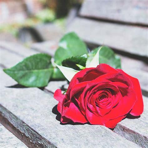 valentine s day ideas interflora