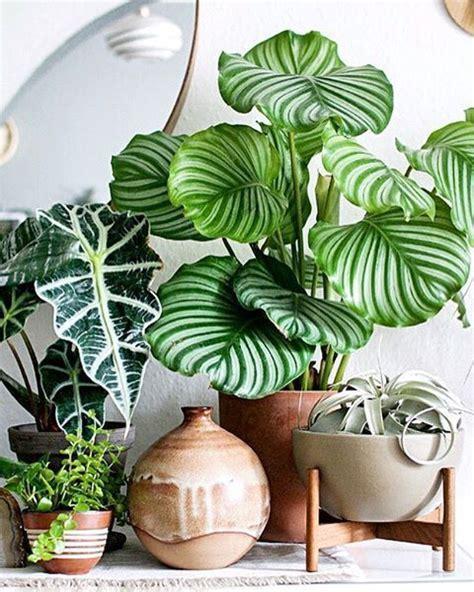 Plantes Appartement Sombre by Les Tendances D 233 Co 2018 Qui Vont Cartonner D Apr 232 S