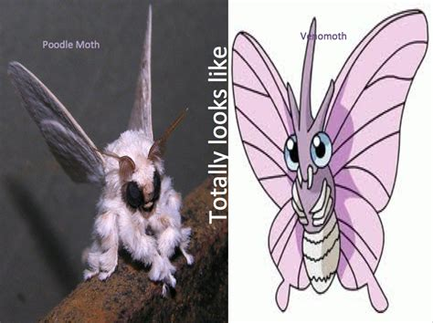 Small Bathrooms poodle moth pokemon