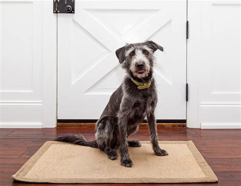 mats on dogs how to protect wood floors from paws claws and in laws