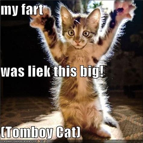 Cat Fart Meme - the fart by a cat thinglink