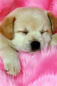 Com cute dog iphone cute wallpapers animal background litle pups