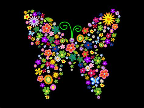 colorful butterfly colorful flowers and butterflies backgrounds animals