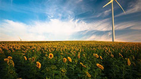 wallpaper sunflower fields wind turbine  nature