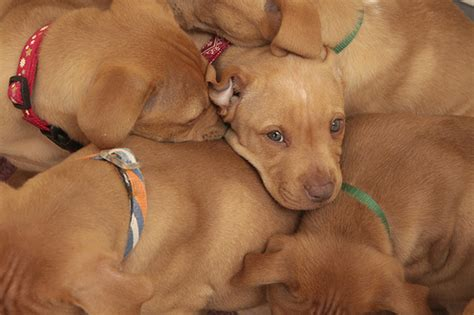 new puppy care best friends animal society dedicates new puppy care center
