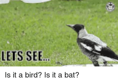 25 best memes about is it a bird is it a bird memes