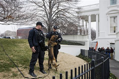white house guard dogs washington photo blog guard dog time