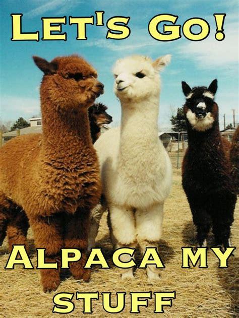 animal puns gosh   love  alpacas silly