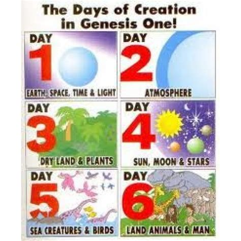what are the 7 days of day 6 of creation www imgkid the image kid has it