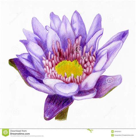 fiore di loto disegno disegni fiori di loto