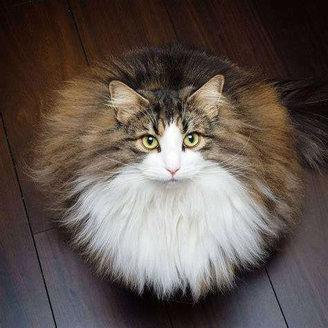 Pen Kartun Kucing Lovely Cat Soft Gel Black Pen 0 38mm Spe016 Furball Booboo Fashion S 246 Ta Saker Kattungar Och Inspiration