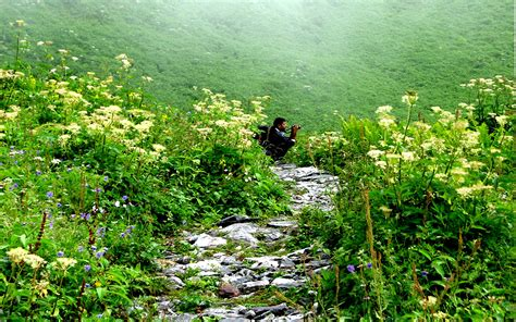 valley of flowers trek valley of flower trekking 2017 trekking in india because it is good to get lost in the