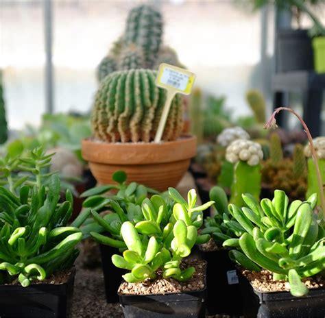 Piante Appartamento Nomi piante da appartamento foto e nomi piante per interni