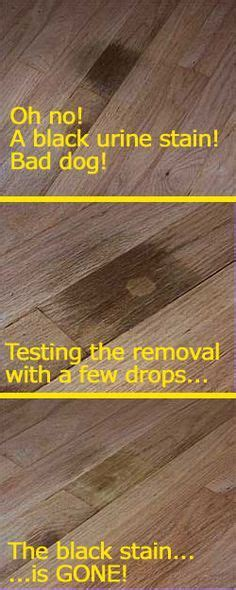 How to Clean Pet Urine from Wood Floors #stepbystep Just