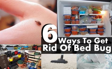 easy way to get rid of bed bugs 6 diy ways to get rid of bed bug diy life martini