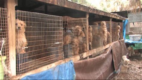 usda puppy mills look out puppy mills new usda regulations apply to you