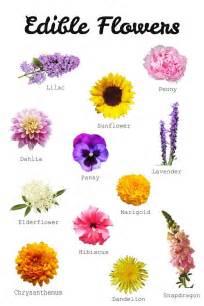 list of flowers best 25 edible flowers cake ideas on pinterest