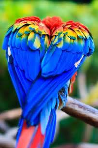 bird with colorful feathers a bird s wings makes a beautiful the rainbow