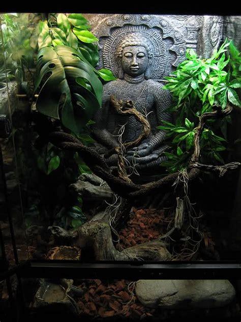 sri lanka crested gecko tank reptile forums reptile