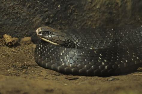 Snake Garden Katraj 2012 07 22 Pune Zoo 4 Flickr Photo