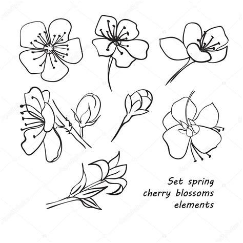 fiori di ciliegio giapponesi disegni insieme dei fiori di ciliegio di primavera disegno a mano