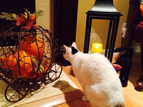 qvc fall decorations fall 5 jpg