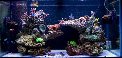 live rock aquascape pictures of just your liverock aquascaping for a sps