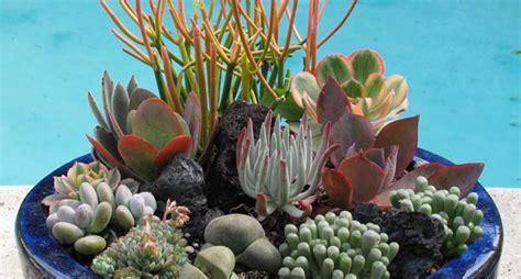 composizione di piante grasse in grande vaso la coltivazione delle piante grasse piante grasse
