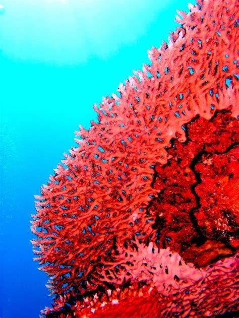 61 best coral reef images on marine