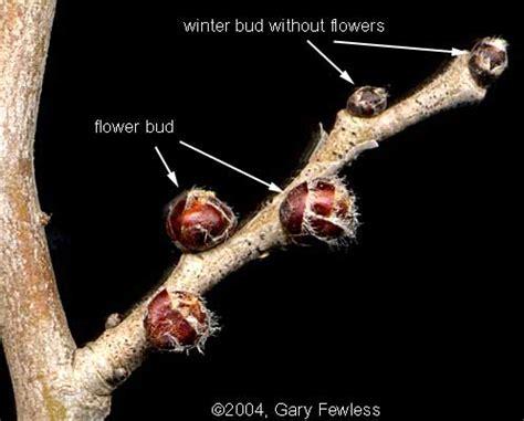 borne fruit definition vascular plants of wisconsin glossary