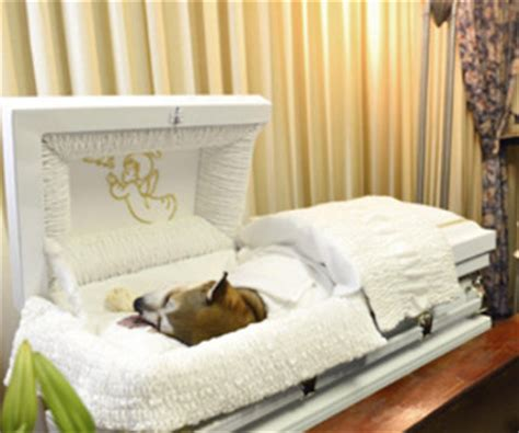 Pet Funeral Home by Loved Gets Human Like Funeral