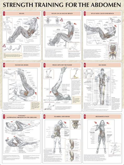 strength for the abdomen chart fitness health strength chart and