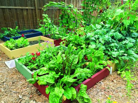 garden bed cover reasons to build a raised garden bed toronto star