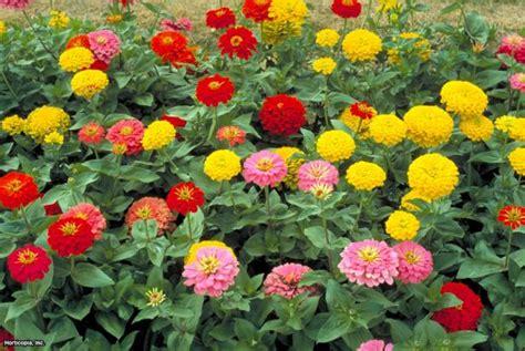 annual flowers  plants    hgtv