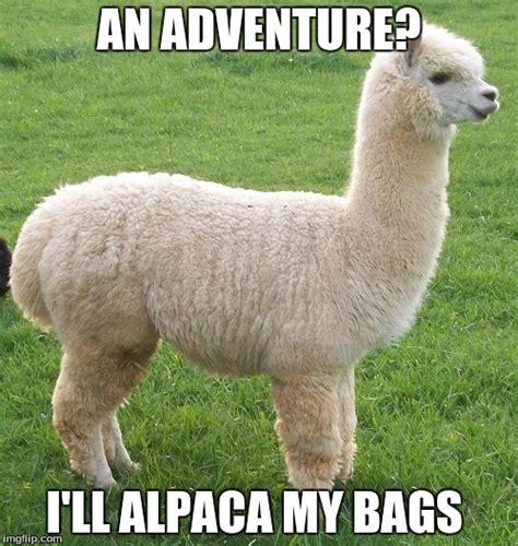 Alpaca My Bags Meme - image tagged in alpaca my bags imgflip