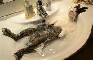 Baby Born Shower Bath las mejores fotos de animales en el ba 241 o