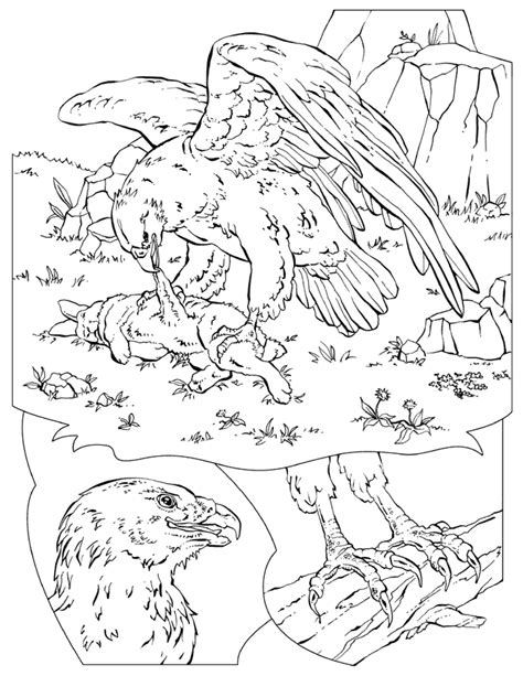 National Geographic Coloring Pages Coloring Home National Geographic Coloring Pages
