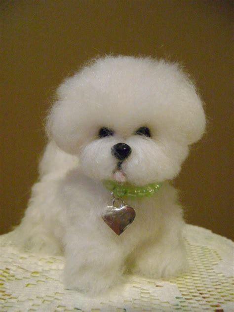 bichon frise puppy cut bichon cuts photos hairstylegalleries