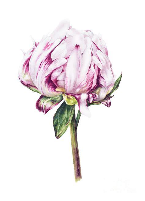 Floral Duvet Single Peony Ii Painting By Marie Burke