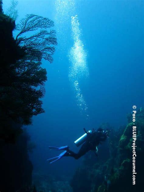 blue dive shop blue project dive shop dive shop cozumel mexico scuba