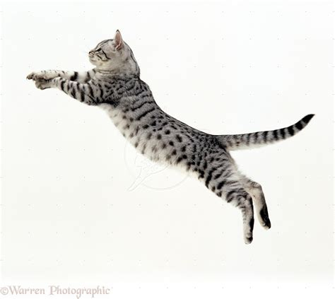 How To Stop A Cat From Jumping On Furniture by Assisi Animal Health Six Signs Your Cat Is In