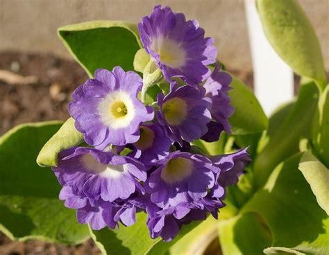 que se siembra en septiembre facilisimocom mejores 37 im 225 genes de minigu 237 as de siembra las alegres y coloridas pr 237 mulas plantas